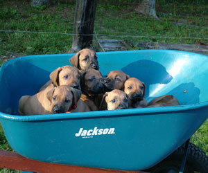 ApacheRidge Ranch Puppies